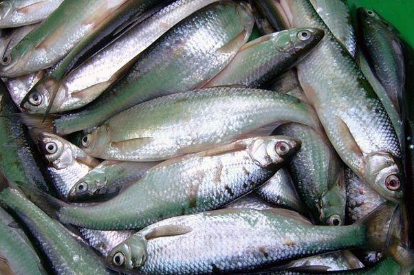 Рыбу нужно помыть, выпотрошить, удалить головы