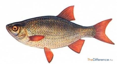 Вид рыбы