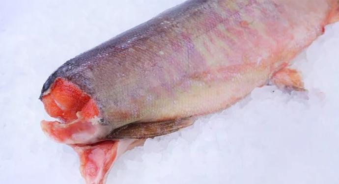 красная рыба на льду