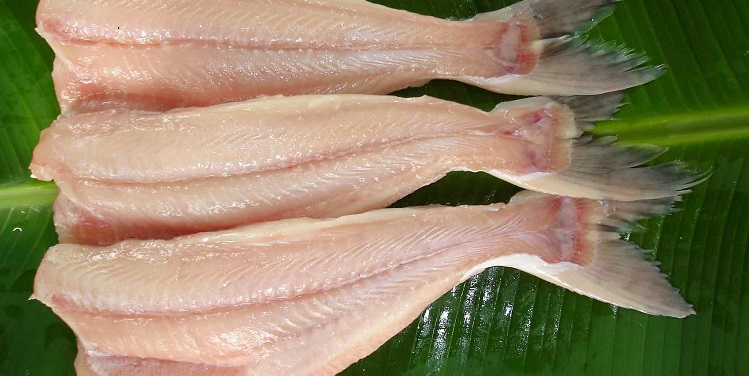 Рыба пангасиус что это за рыба