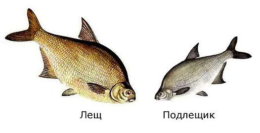 Различия