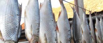 как сушить рыбу в домашних условиях летом
