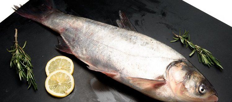 Толстолобик что за рыба