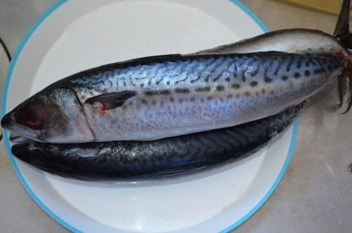 foto chem otlichayutsya skumbriya i makrel 1
