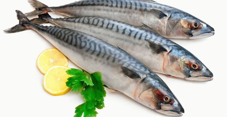 Макрель что за рыба