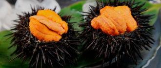 Икра морского ежа – полезные и лечебные свойства