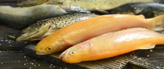 Форель янтарная что за рыба – характеристика